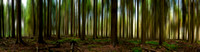 "The Enchanted Forest - 36"" Panoramic Print"